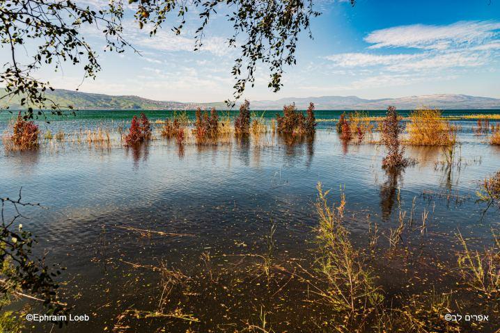 Lac de Tiberiade © Ephraim Loeb